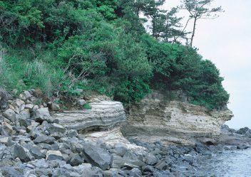 壱岐長者原化石層