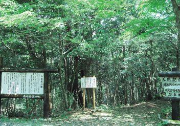 多良岳ツクシシャクナゲ群叢