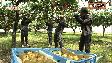 今年度第23回のテーマは「長崎県立農業大学校」。農業大学校には野菜、花き、果樹、畜産の4つの学科があり、農業関係で活躍する人材を育成しています。今回は果樹学科と...